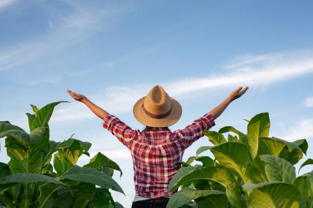 joyful-young-woman-tobacco-plantation_1150-5870